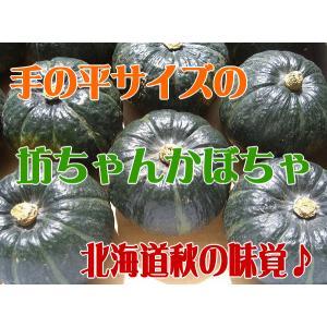 北海道産坊ちゃんかぼちゃ 8〜11玉入り/10月上旬発送 foodwave