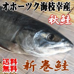 【送料無料】オホーツク海枝幸産 新巻鮭 2.5kg/秋鮭 新物 寒風干し|foodwave