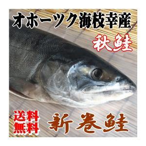 【送料無料】オホーツク海枝幸産 新巻鮭 3.0kg/秋鮭 新物 寒風干し|foodwave
