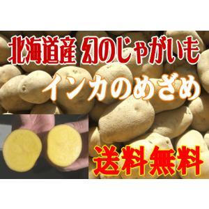 送料無料/北海道産インカのめざめ/5kg 10月中旬発送 foodwave