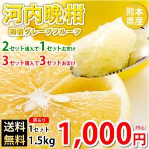 河内晩柑 文旦 みかん 訳あり 送料無料 和製グレープフルーツ 1.5kg S〜3L 2セットで1セ...