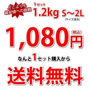 デコポン 同品種 訳ありデコみかん 1.2kg...の詳細画像4