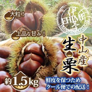 くり 栗 生栗 愛媛中山産 送料無料 約1.5kg 大粒 3Lサイズ以上 クール便