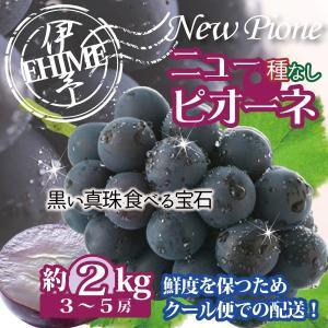 溢れる果汁と豊潤な味わい!大粒で上品な風味! 黒い真珠 食べられる宝石 種無しピオーネ「ニューピオー...