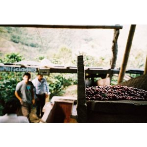 ハワイ・コナ 100% ハワイアンクイーン農園 200g|frestaplus|02