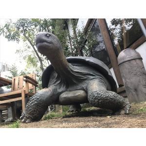 ガラパゴスの陸亀 FRPアニマルオブジェ 即納可|frps|04