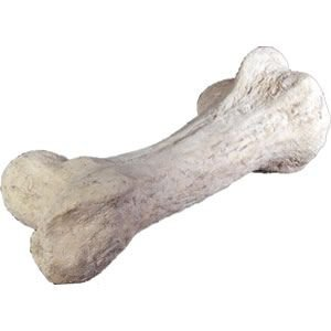 FRP恐竜オブジェ 恐竜の骨|frps