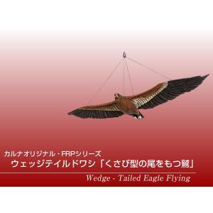ウェッジテイルドワシ「くさび型の尾をもつ鷲」 FRPアニマルオブジェ frps 02