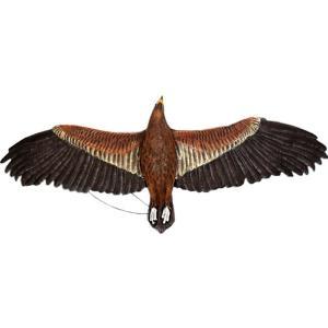 ウェッジテイルドワシ「くさび型の尾をもつ鷲」 FRPアニマルオブジェ frps 07