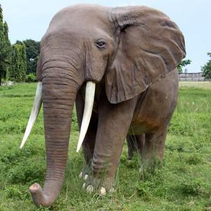 アフリカ象 FRPアニマルオブジェ|frps