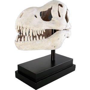 FRP恐竜オブジェ T-Rexの頭骨|frps