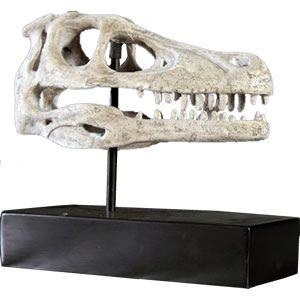 FRP恐竜オブジェ ラプトルの頭骨|frps