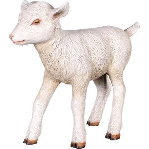 ヤギの赤ん坊 FRPアニマルオブジェ|frps