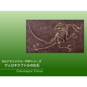 FRP恐竜オブジェ ヴェロキラプトルの化石|frps|02