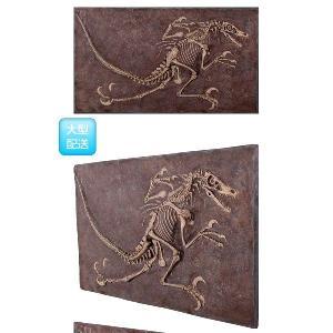 FRP恐竜オブジェ ヴェロキラプトルの化石|frps|03