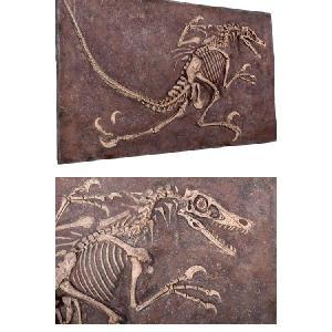 FRP恐竜オブジェ ヴェロキラプトルの化石|frps|04