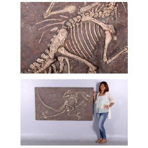 FRP恐竜オブジェ ヴェロキラプトルの化石|frps|05