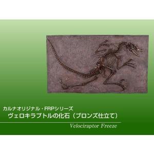 FRP恐竜オブジェ ヴェロキラプトルの化石(ブロンズ仕立て)|frps|02