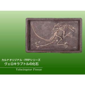 FRP恐竜オブジェ ヴェロキラプトルの化石 frps 02