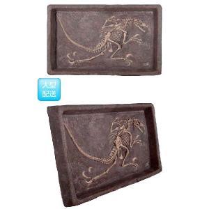 FRP恐竜オブジェ ヴェロキラプトルの化石 frps 03
