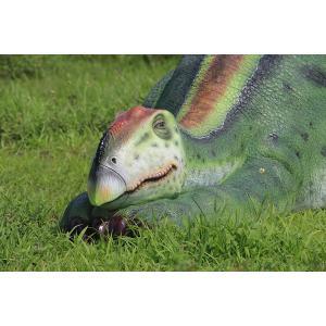 眠るムッタブラサウルス FRP恐竜オブジェ|frps|18