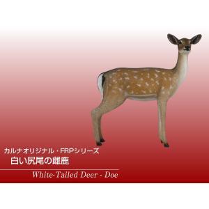 白い尻尾の雌鹿 FRPアニマルオブジェ|frps|02