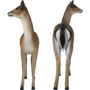 白い尻尾の雌鹿 FRPアニマルオブジェ|frps|04