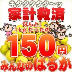 家計救済みんなの150円はるか(訳あり・不揃い) fruit-sunny