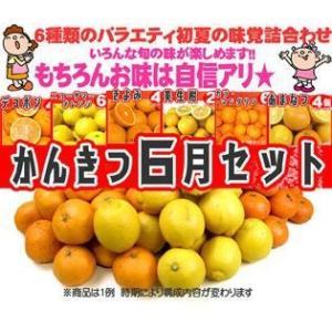 2倍でずっとお得♪初夏のかんきつセット スペシャル【送料無料】5・6月|fruit-sunny