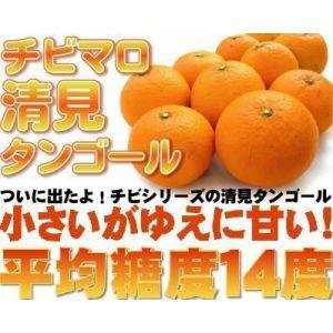 チビまろ清見タンゴール10kg【送料無料】訳あり|fruit-sunny