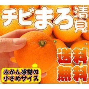 チビまろ清見タンゴール2kg【送料無料】訳あり|fruit-sunny