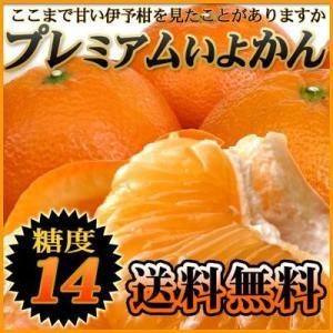 奇跡の糖度!熟成プレミアム伊予柑 5kg 送料無料 愛媛県産 いよかん フルーツ 果物 くだもの みかん 柑橘類 愛媛産 産地直送|fruit-sunny