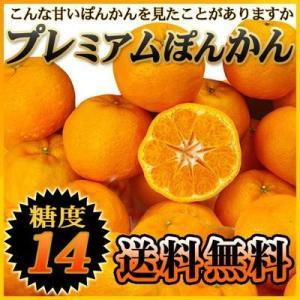 高糖度!熟成プレミアムぽんかん 5kg 送料無料 ポンカン 椪柑 フルーツ 果物 くだもの みかん 柑橘類 産地直送|fruit-sunny