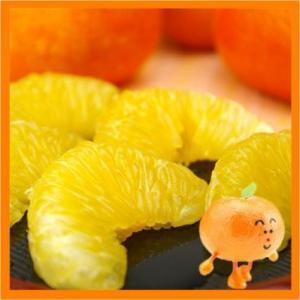 送料無料 いよかん 興居島(ごごしま)伊予柑 2kg  いよかん 訳あり  1月下旬より発送開始|fruit-sunny