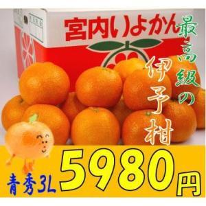 送料無料 興居島(ごごしま)伊予柑 贈答用 青秀3L 10kg送料無料  1月下旬発送開始 |fruit-sunny