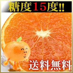 訳あり天草タンゴール2kg送料無料 fruit-sunny