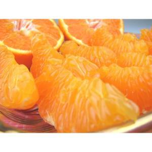完熟はるみ秀品5kg×2箱=10kg送料無料 fruit-sunny