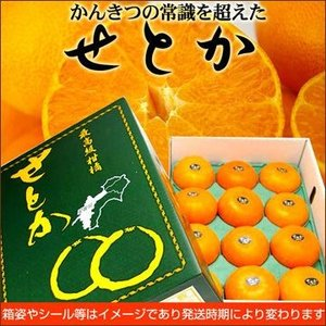 贈答用 せとか(優品)2L 3kg送料無料|fruit-sunny