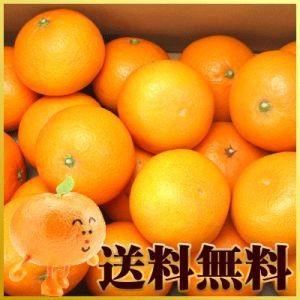 清見タンゴール5kg【贈答用】【送料無料】秀品|fruit-sunny