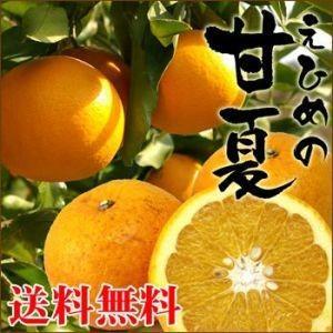 愛媛産 訳あり甘夏 2kg【送料無料】|fruit-sunny
