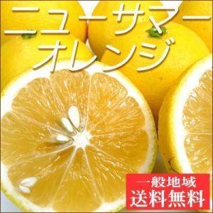 訳ありニューサマーオレンジ2kg【送料無料】小夏・日向夏・不揃い|fruit-sunny