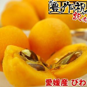 大豊作祝いのびわ!愛媛産の甘いびわ2パックに1パックサービス♪訳あり・不揃い|fruit-sunny