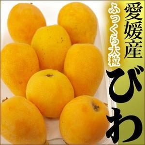 愛媛産 果肉ふっくら夏の味覚 ごごしまのびわ 1パック|fruit-sunny