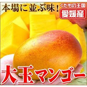 愛媛産大玉マンゴー 1個|fruit-sunny