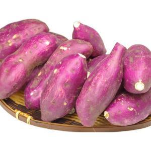 現在出荷中♪小ぶりな新鳴門金時10kgホクホクッあま〜い♪【送料無料】 さつまいも 焼き芋 スイーツ スイートポテトや天ぷらに 食品 サツマイモ おやつ fruit-sunny