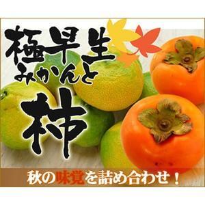 大豊作祝いみかん5kg(極早生)と柿4kgのセット【送料無料】 かき カキ フルーツ 果物 旬 くだもの 食品 柑橘類 ミカン おやつ 果実|fruit-sunny