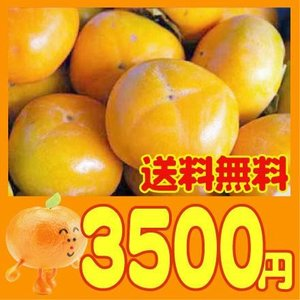 愛媛産 種なし刀根柿 4kg(訳あり・不揃い)送料無料|fruit-sunny