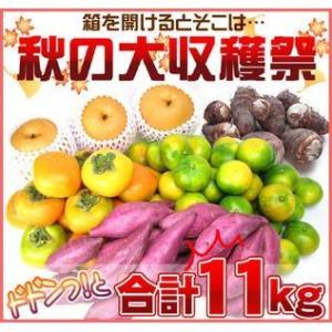 たっぷり11kg!秋の味覚どっさり便送料無料 フルーツ 果物 旬 くだもの 食品 おやつ 果実|fruit-sunny