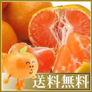 期間限定!プレミアムみかん5kg×2箱=10kg贈答用 ギフト 送料無料 フルーツ 果物 くだもの 食品 おやつ みかん 柑橘類 ミカン 産地直送 fruit-sunny