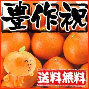 大豊作祝い 伊予柑 5kg 送料無料 訳あり・不揃い【2月上旬発送予定】いよかん フルーツ 果物 くだもの おやつ みかん 柑橘類 ミカン 産地直送|fruit-sunny